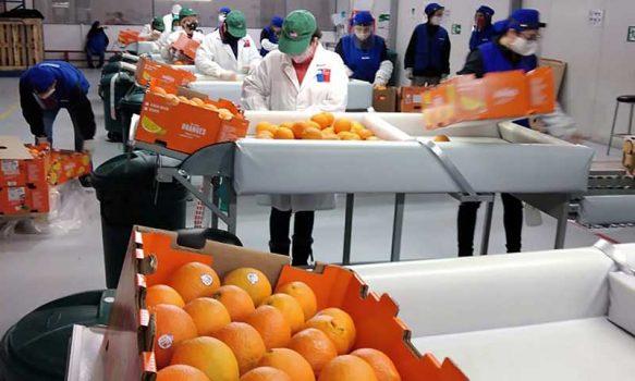 En Sitio de Inspección Los Lirios: SAG del Minagri ya ha inspeccionado 7 millones de cajas de frutas a pesar de la pandemia