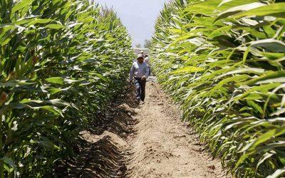 INDAP sigue atendiendo a más de 11 mil pequeños agricultores de O'Higgins