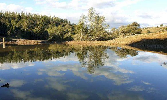 Las exitosas aguadas de Conaf que benefician a familias del secano costero