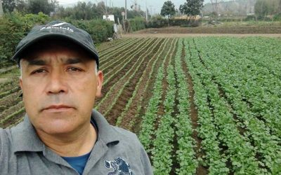 Pequeños agricultores cuentan cómo se han adaptado a las nuevas condiciones de mercado por la pandemia