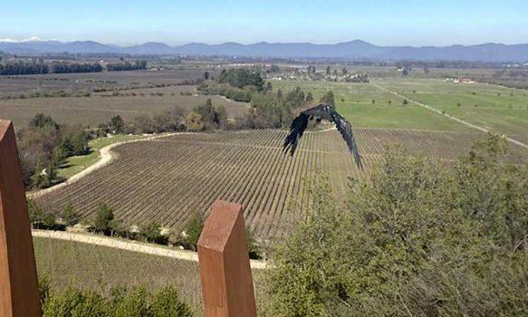 SAG O'Higgins libera ejemplar de águila mora en Santa Cruz