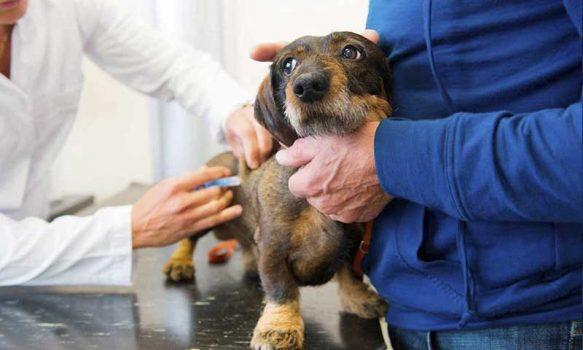 Vacunas que debe tener tu perro