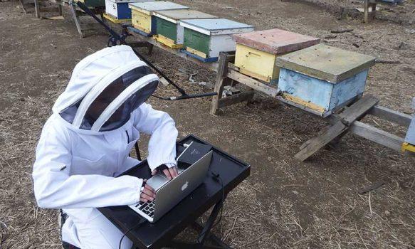 Día Nacional de la Miel: Desarrollan aplicación móvil que busca detectar enfermedades de las abejas