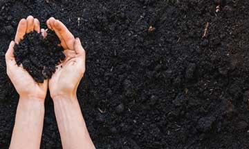 Tres formas de hacer abono en casa: un primer paso para la agricultura sustentable