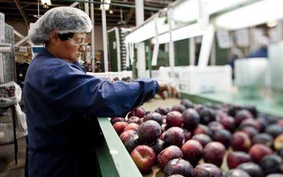 Abre convocatoria nacional 2021: se destinarán $4 mil millones para proyectos de innovación en el agro