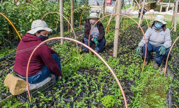 Codelco: División el Teniente crea primer centro de conservación de plantas de Chile central