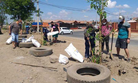 Municipalidad realiza plantación de árboles en sector poniente de la ciudad