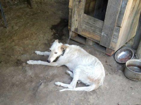 Polonia: Organización de rescate y adopción denuncia maltrato animal