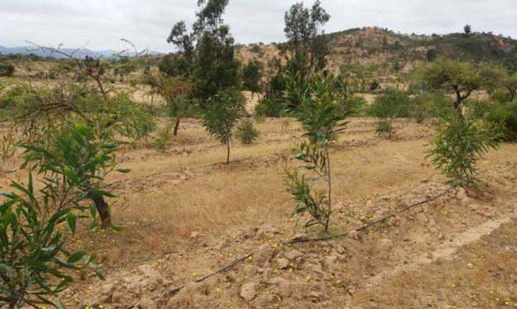 Pumanque: La resiliencia del territorio post-incendios, una innovación necesaria en la dañada comuna