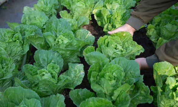 Cooperativas agrícolas se unen en busca de soluciones innovadoras para desarrollar una horticultura diferenciadora en O'Higgins
