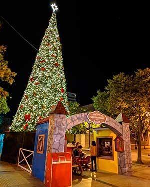 Árbol de Navidad de la Plaza de Los Héroes fue encendido en emocionante ceremonia