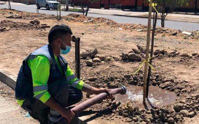Rancagua: Más de cien árboles son plantados en sector poniente