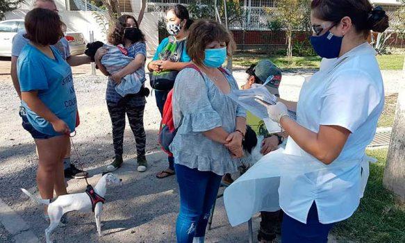 Municipalidad de Rancagua realiza operativo veterinario masivo de mascotas sin costo