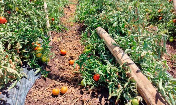 HortiCrece y Corfo trabajan para ir en apoyo de los agricultores afectados por las lluvias