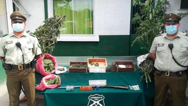 10 kilos y 17 plantas de marihuana encontraron Carabineros en Chépica