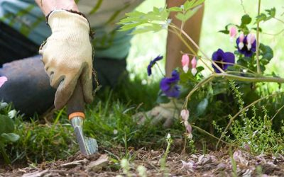 Cinco consejos para cuidar nuestro jardín de las altas temperaturas