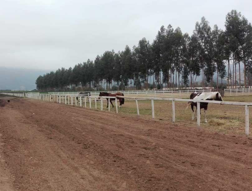 Carabineros detuvo a 29 personas que participaban en carreras clandestinas de caballos en Santa Cruz