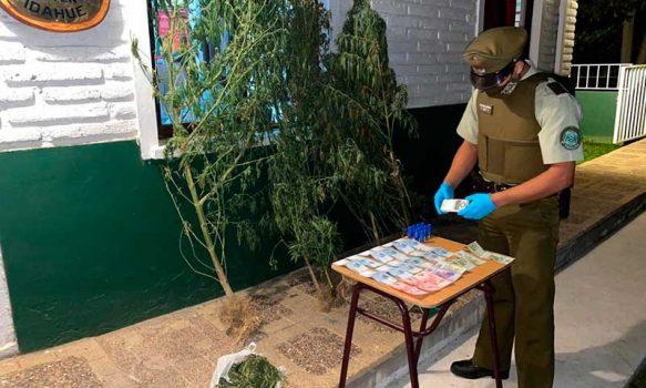 Dos detenidos por Carabineros en Coltauco con marihuana