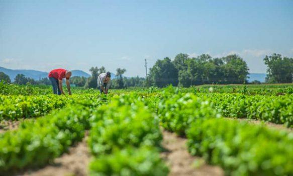 HortiCrece es seleccionado como caso de buenas prácticas en la pequeña agricultura en Latinoamérica