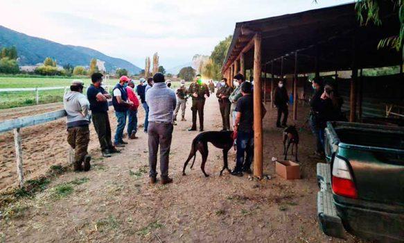 Las Cabras: Carabineros detuvo a 12 personas en carreras de perros