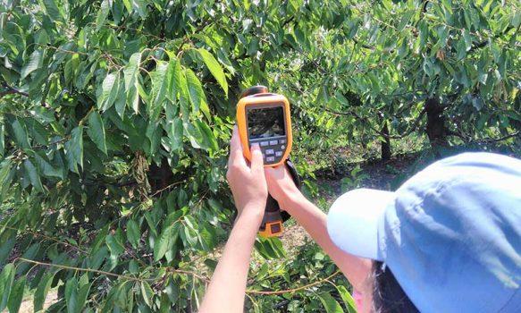 La sostenibilidad del riego es clave para la producción de fruta