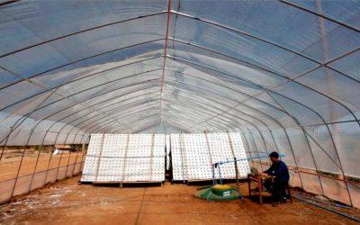 Hidrocultivo Aeropónico surge en Pumanque como opción sustentable para producción Hortícola