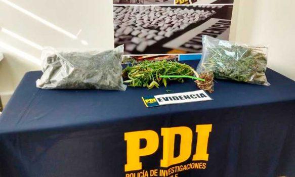 PDI detuvo en Pichidegua a sujeto que tenía 1 kilo de marihuana en su poder