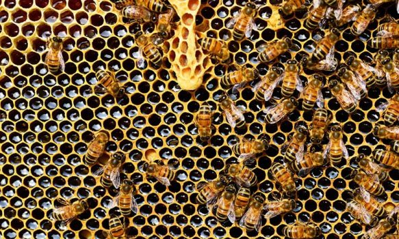abejas miel