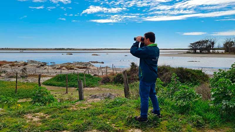 Equipo del SAG O'Higgins verifica denuncia de aves muertas en Pichilemu