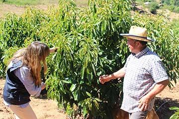Hasta un 75% aumenta la cobertura del seguro agrícola de Indap